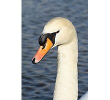 White swan close up. Photographic Print