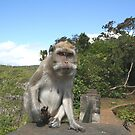 Don't mess with the monkey by Nicholas Averre
