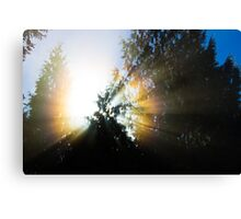 Shining Sun Canvas Print
