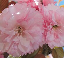 Pretty Pink Blossoms by Marilyn Harris