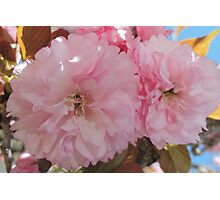 Pretty Pink Blossoms Photographic Print