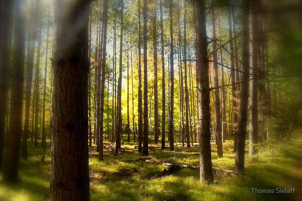 Pine and Color by Thomas Sielaff