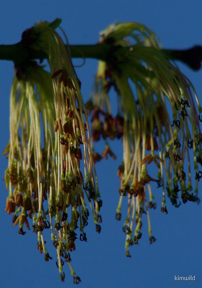 Unusual flower by kimwild
