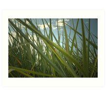 Sagur cane plant 8656 Art Print