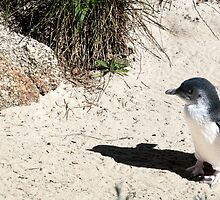 little penguin by Bente Hasler