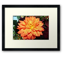 Perfectly Peach Framed Print