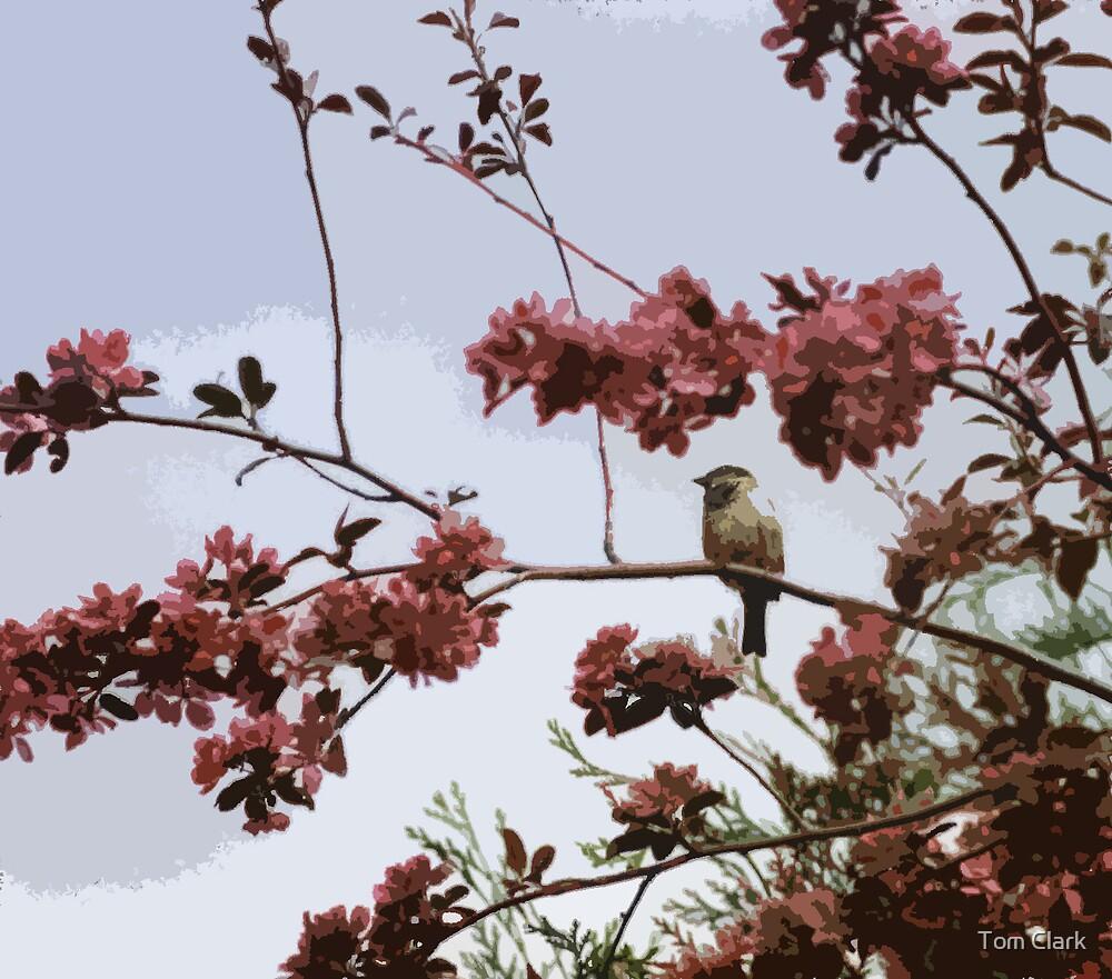 Little Bird by Tom Clark