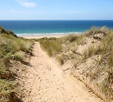 A path through the sand dunes to the beach. by britishphotos