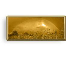 Somewhere In a Cornfield It`s Amber Canvas Print
