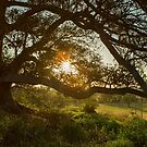 Mystical Tree by Malcolm Katon