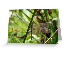 Dragonfly Through The Reeds Greeting Card
