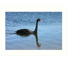 A black swan and a reflection. Art Print