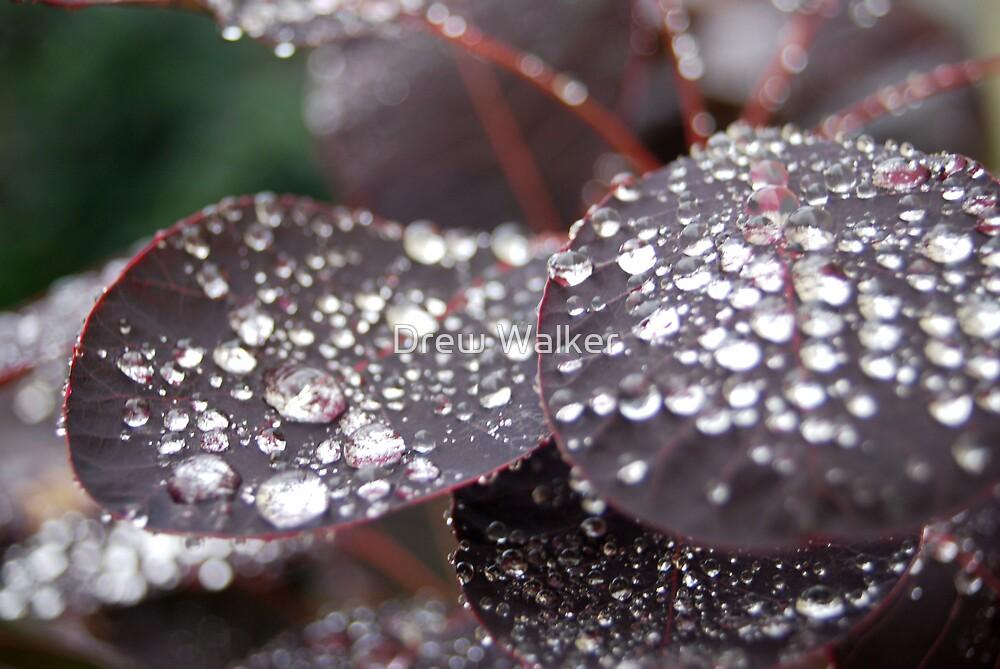 After the rain by Drew Walker