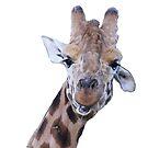 Giraffe by Cherax