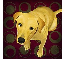 Blond Labrador Mix on Burgndy and Sage Back Photographic Print