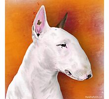 Bull Terrier Painting on Orange Background Photographic Print