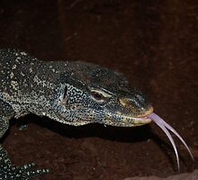 Lizard by Richard Peden