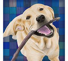 Blond Labrador Smiling with Joy, Chewing a Stick Photographic Print
