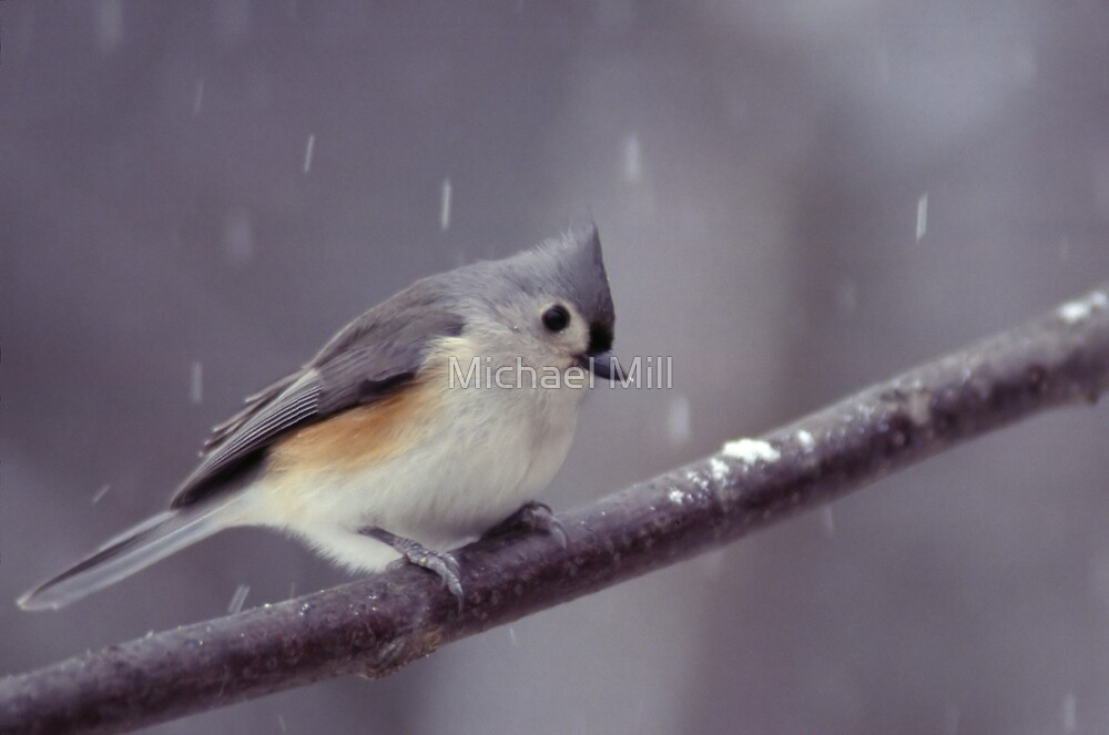 Tufted Titmouse on a Snowy Day by Michael Mill