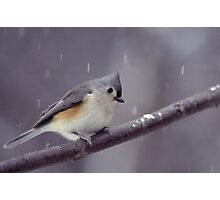 Tufted Titmouse on a Snowy Day Photographic Print