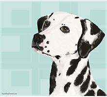 Dalmatian with Honey Eyes on Light Green Back Photographic Print