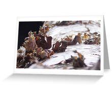 Birch Bark Greeting Card