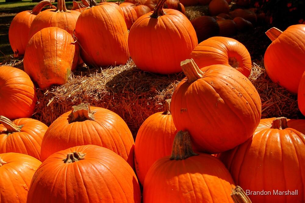 Orange Pumpkins! by Brandon Marshall