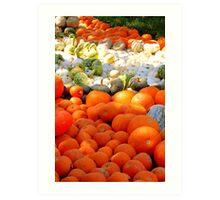 Field of Pumpkins & Gourds Art Print