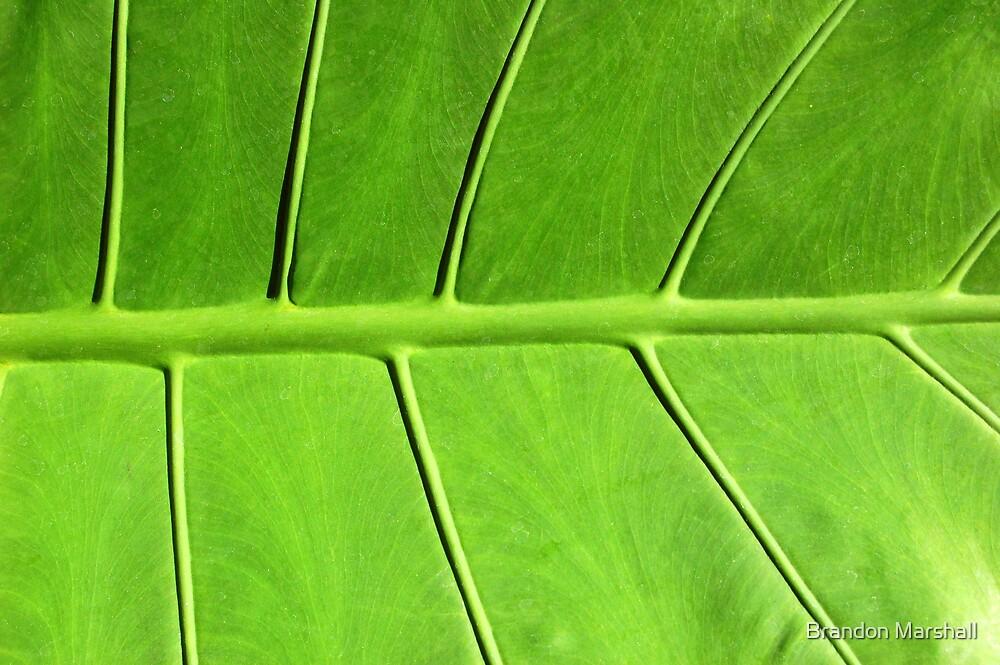 Green Leaf by Brandon Marshall