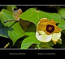 Opening Bloom - Cool Stuff by Maria A. Barnowl