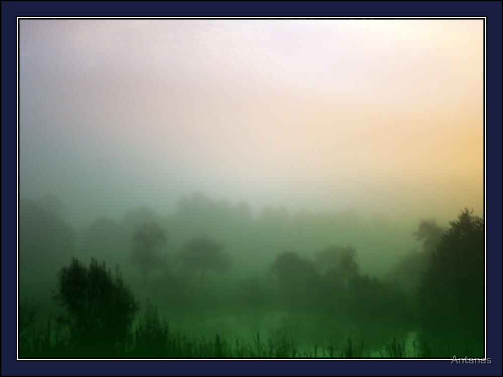 Forest in fog by Antanas