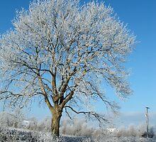 winter in kilkenny Ireland. by GinasFineArt