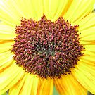 Sunflower close up by 4Flexiway