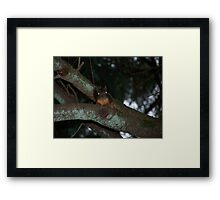 caught a creepy squirrel with his eye on me  aberdeen cemetary Framed Print