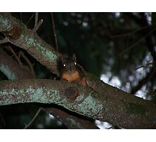 caught a creepy squirrel with his eye on me  aberdeen cemetary Photographic Print