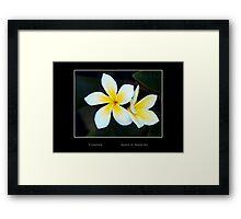 Plumeria - Cool Stuff Framed Print