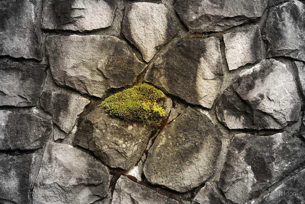 """""""The Wall"""" by sheldoni"""