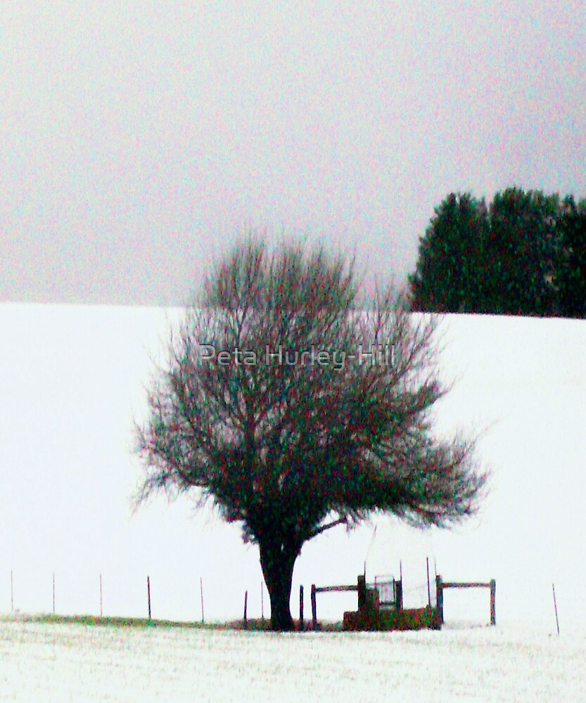 snow tree by Peta Hurley-Hill