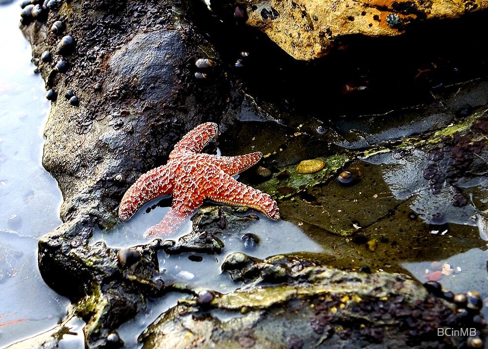 Starfish by BCinMB