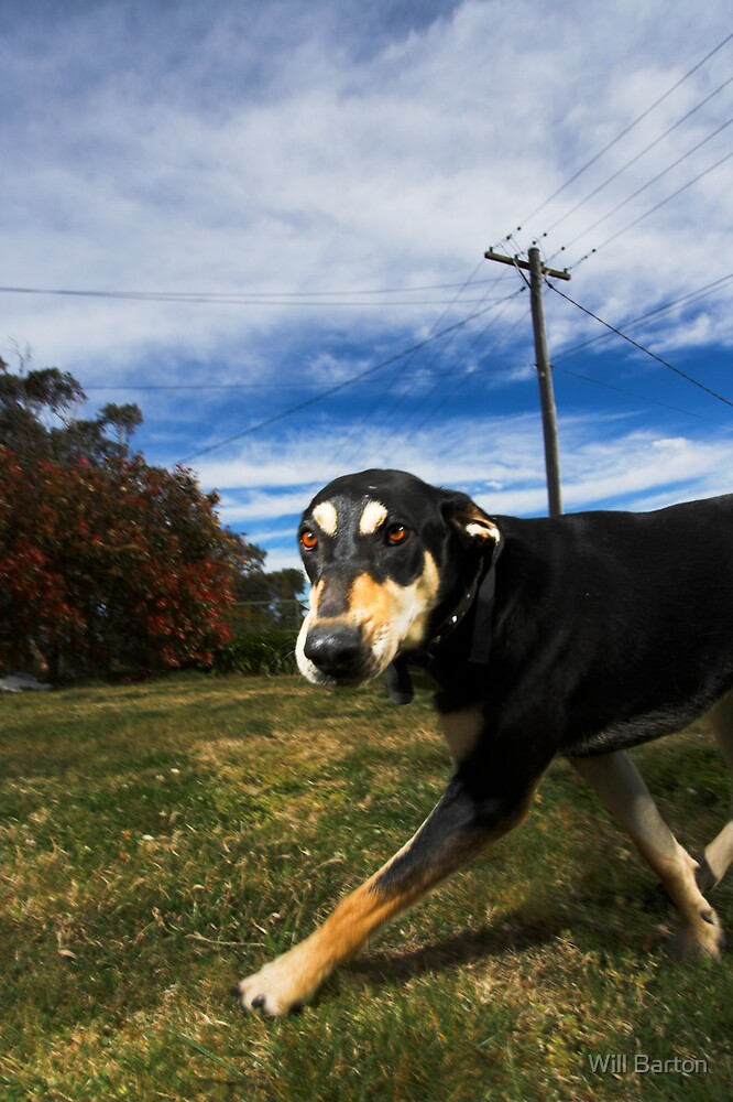 Doogle the Doberman by Will Barton