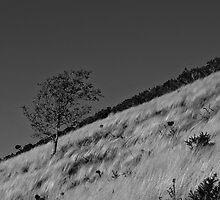Growing up slope by David Benton