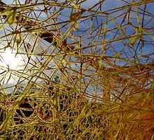 Yellow Spider Web by Leah Hislop