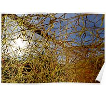 Yellow Spider Web Poster