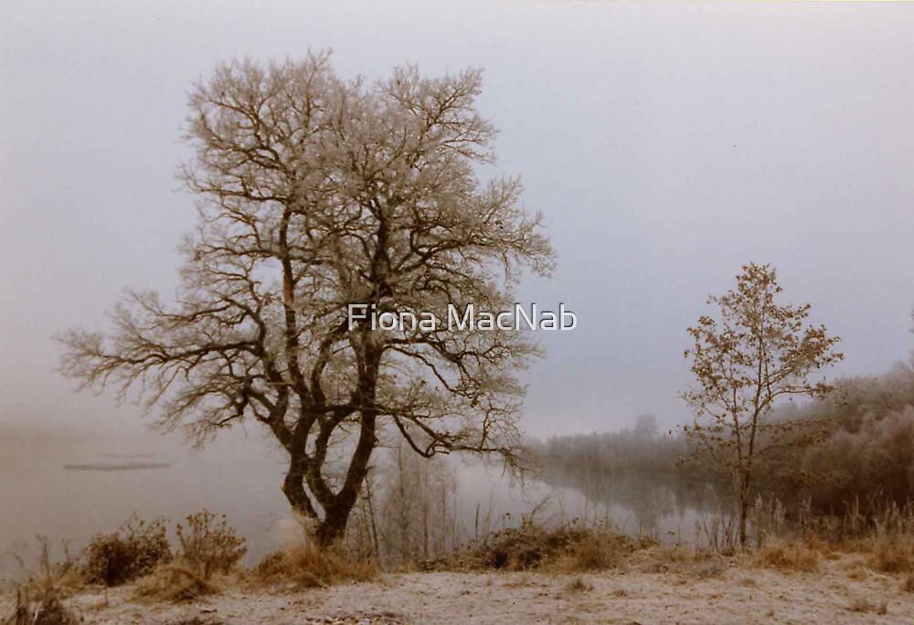 Winter by Fiona MacNab