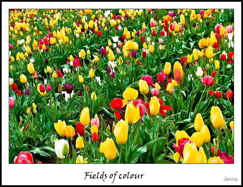 Fields of colour by Jenna