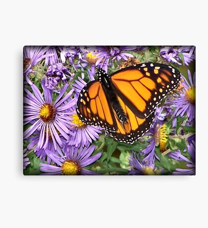 Butterfly Dines Canvas Print