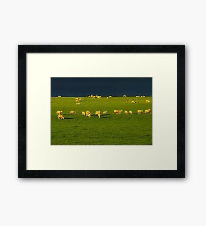"""""""Golden Fleece"""" Framed Print"""