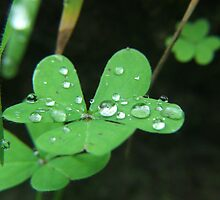 Green leaves and water by Cooper