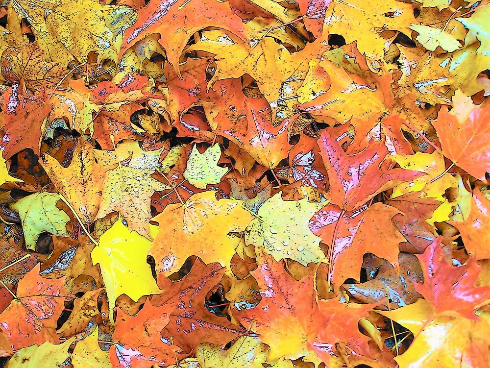 Pretty Ground Cover by Gene Cyr