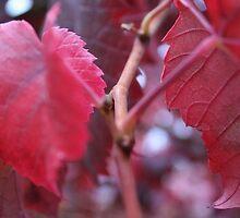 Autumn vine by Cooper